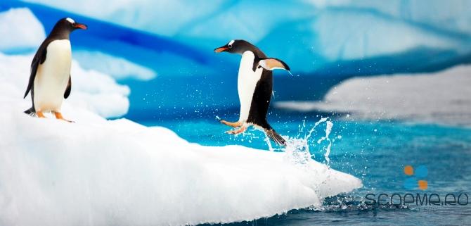 Google Penguin: правила игры на 2013 год